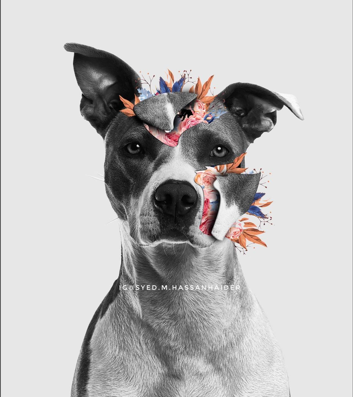 Blossomed dog
