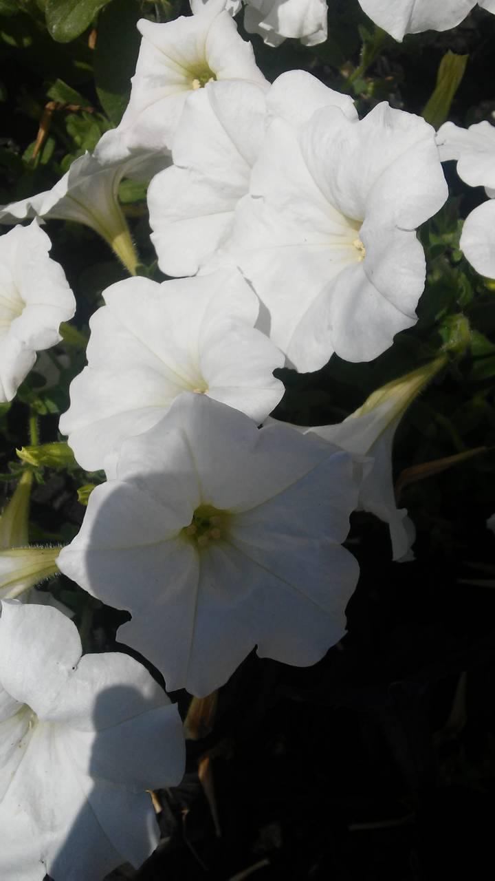 Flowers332