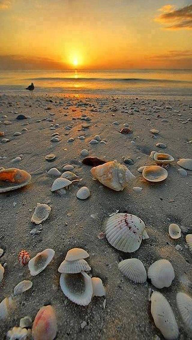 Beach and Shells