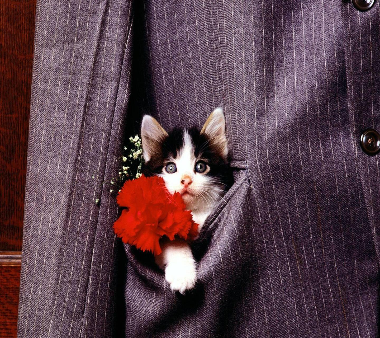 картинки люблю безумно котик