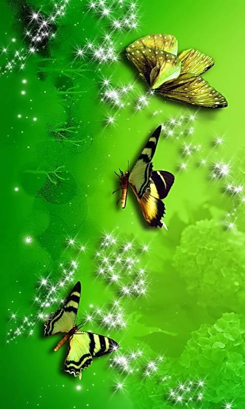 Hydrangea Sparkle