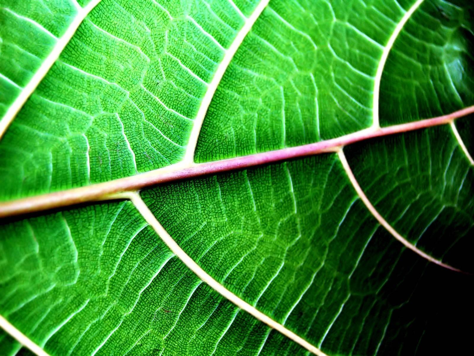 Zoom Plant