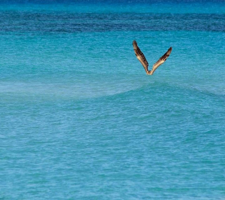 Bird On The Ocean