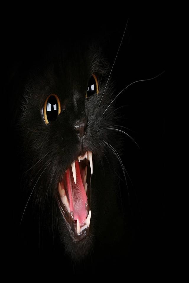 случилось, картинки для телефона черный кот днем ангела людмили