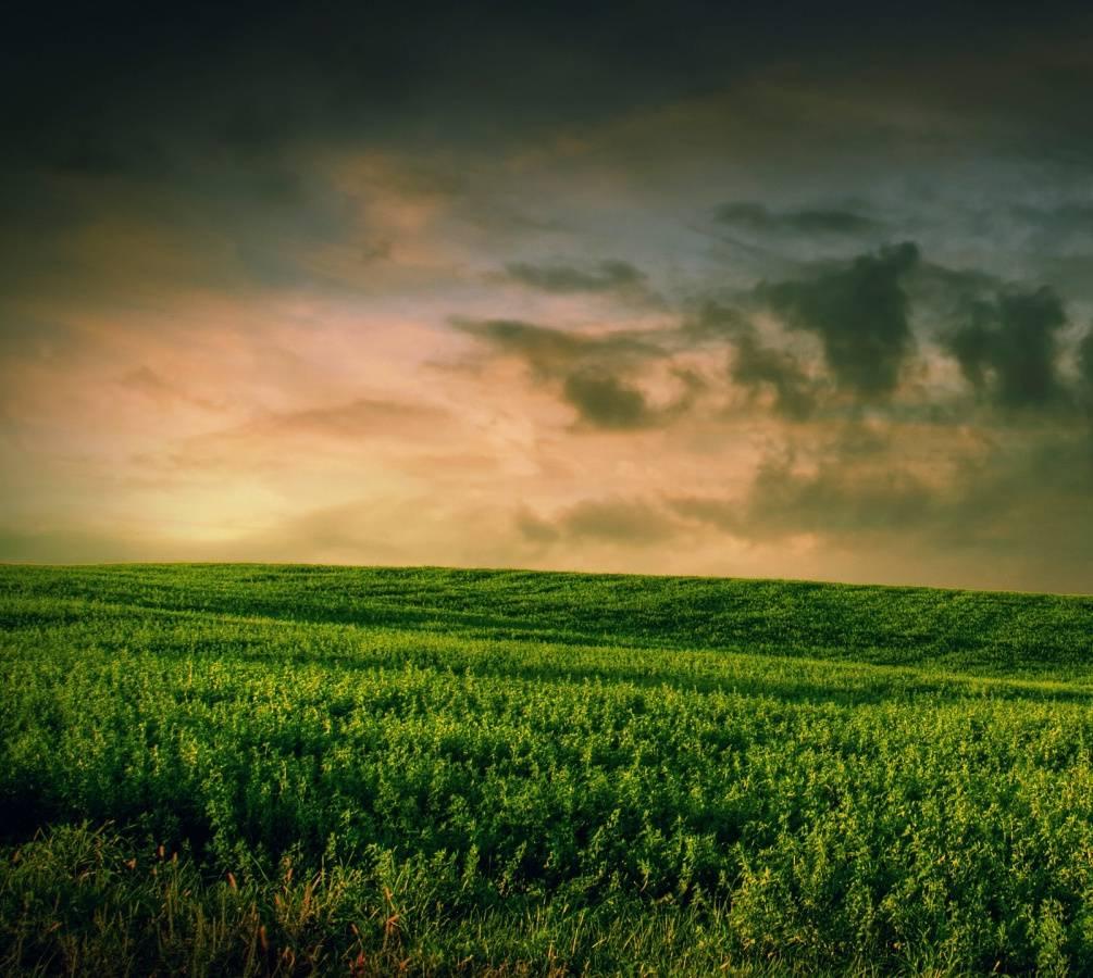 Beautiful Grass