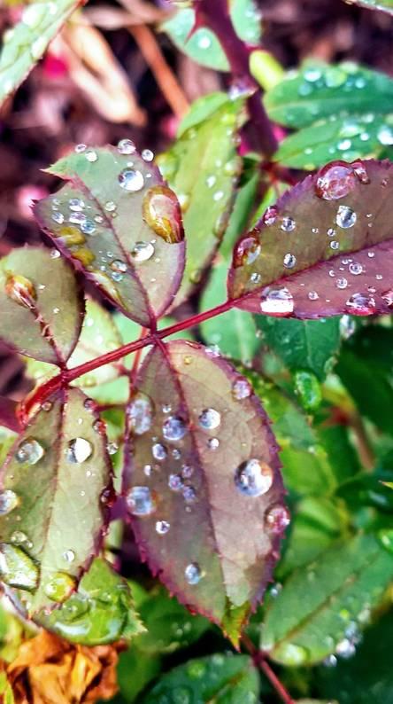 Sprinkled Leaves