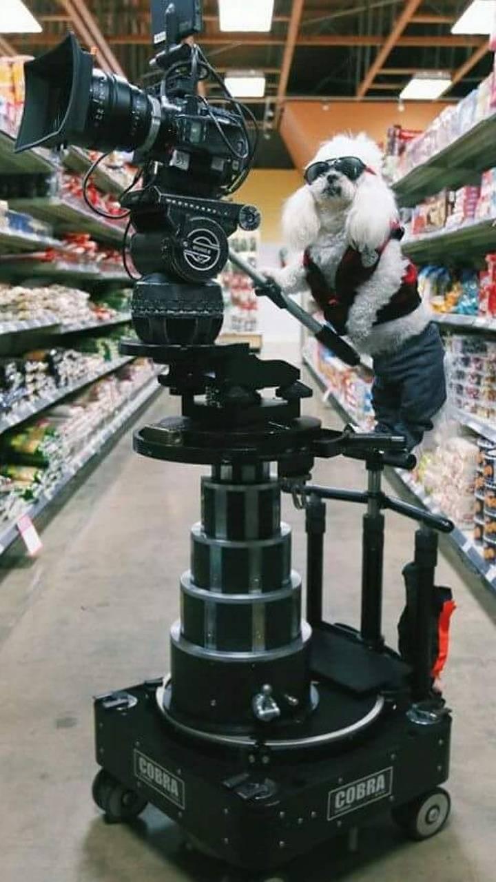 Dog cameraman