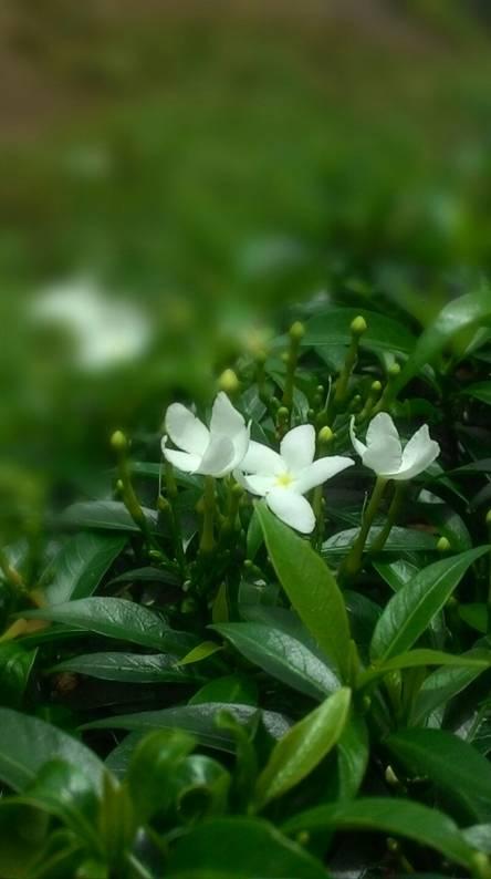 Flower n Green