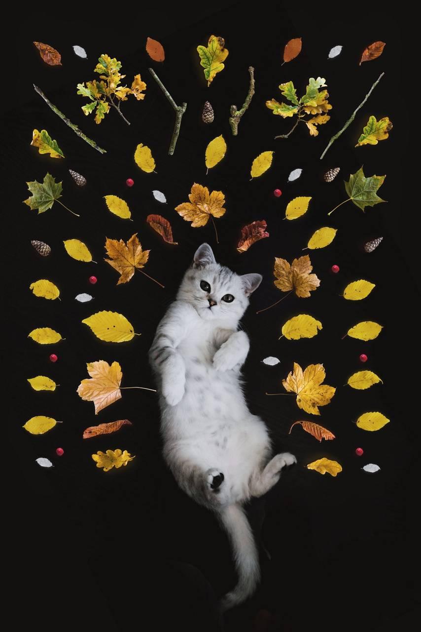 BEAUTIFUL CATE PHOTO