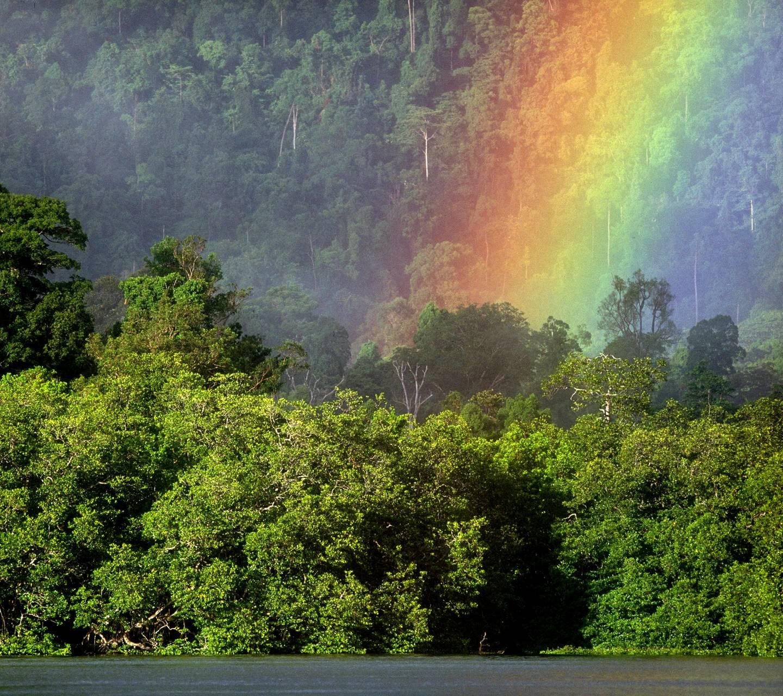 Rainbow Jungle