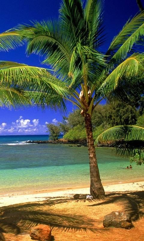 Tropical Lagoon