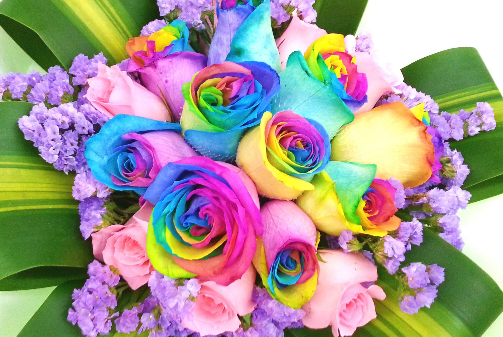 Coulorful roses