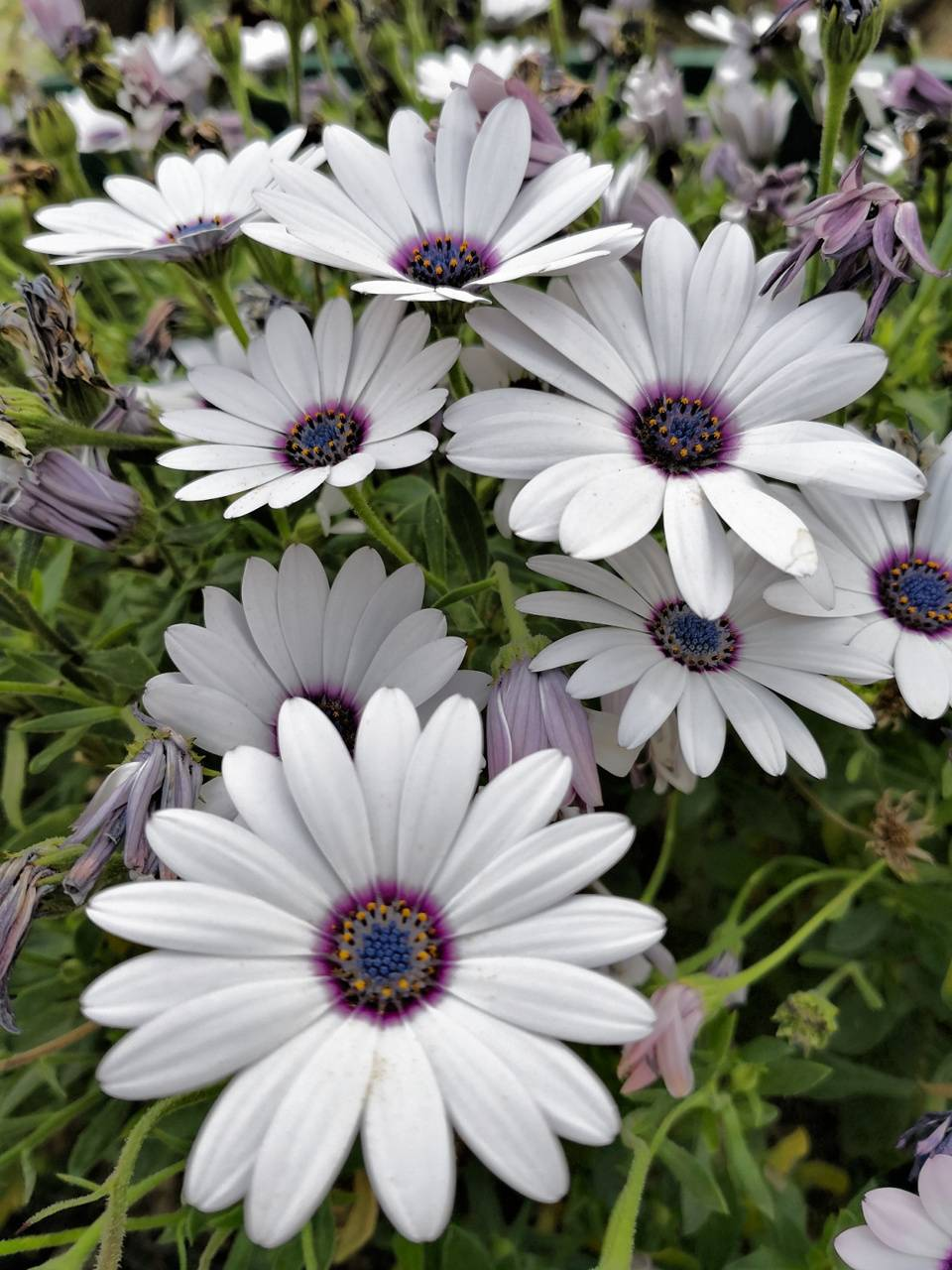 flowers0518