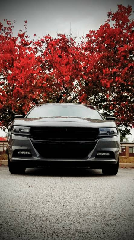 Charger RT red tree