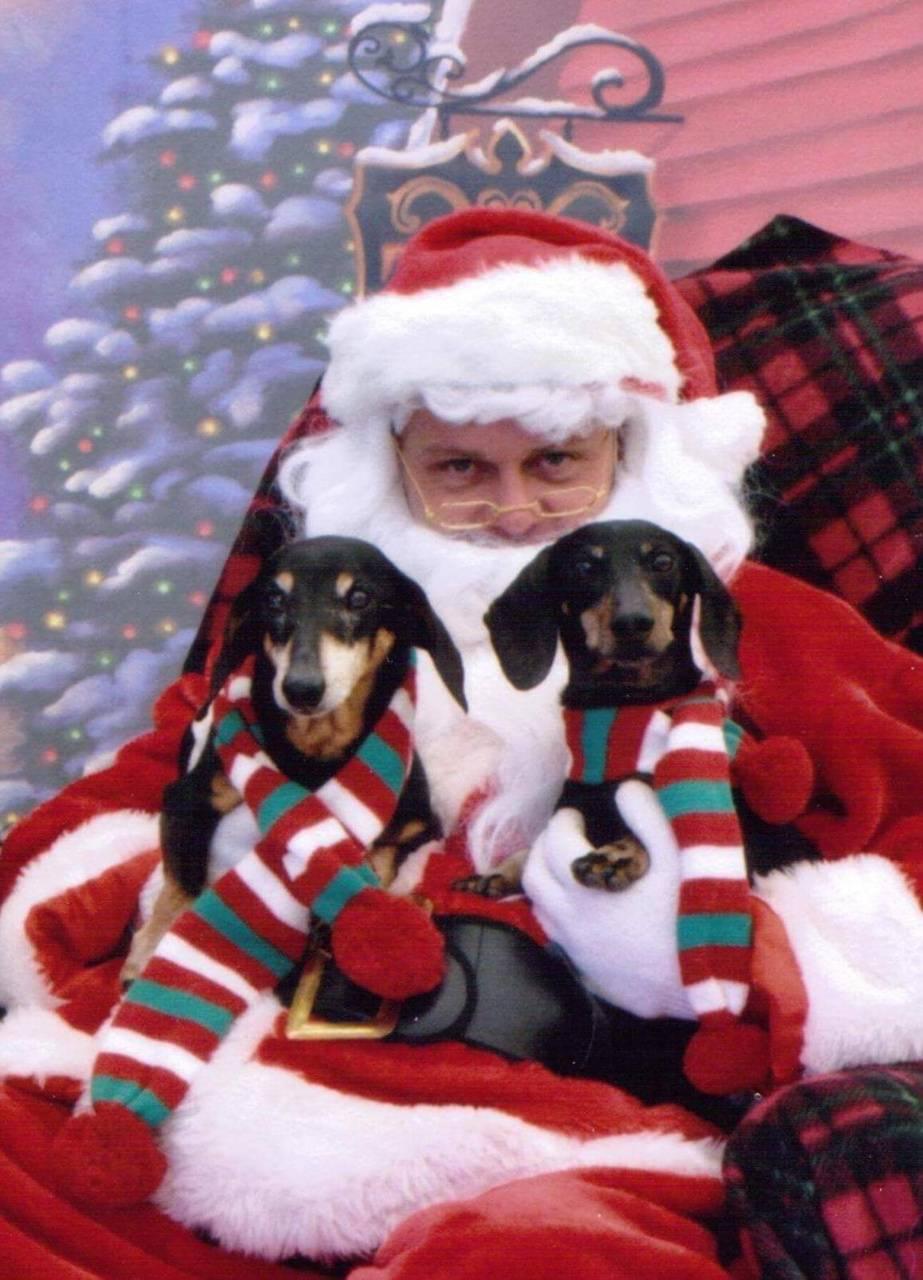 Doxies with Santa