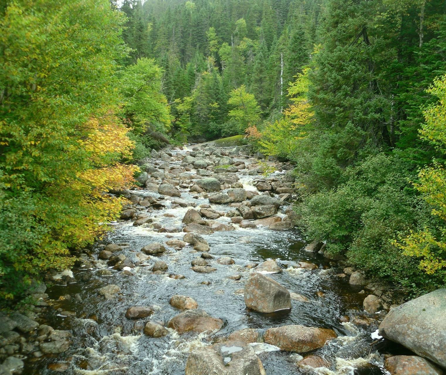 Stone Brook