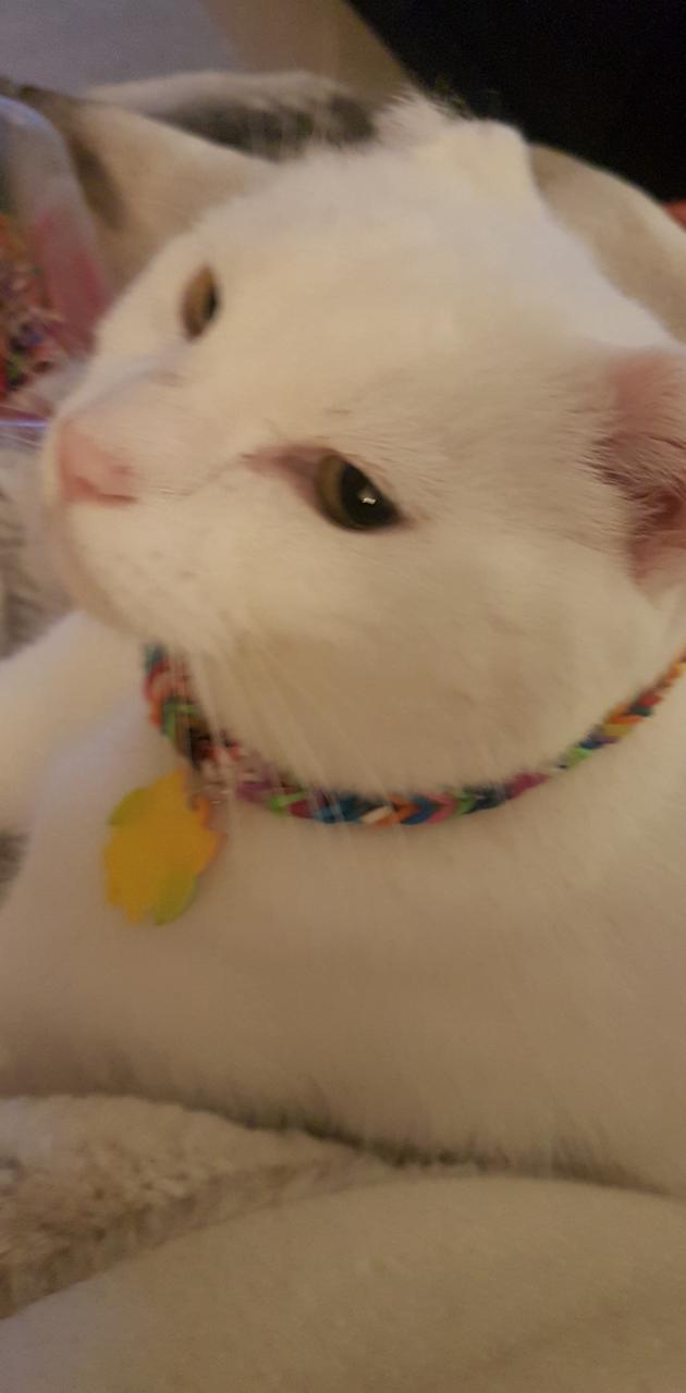 A cat loves jewlerry