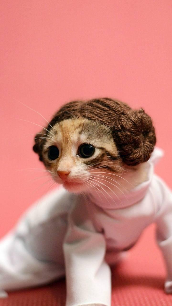 Leia Kitten Wallpaper By Dljunkie 37 Free On Zedge