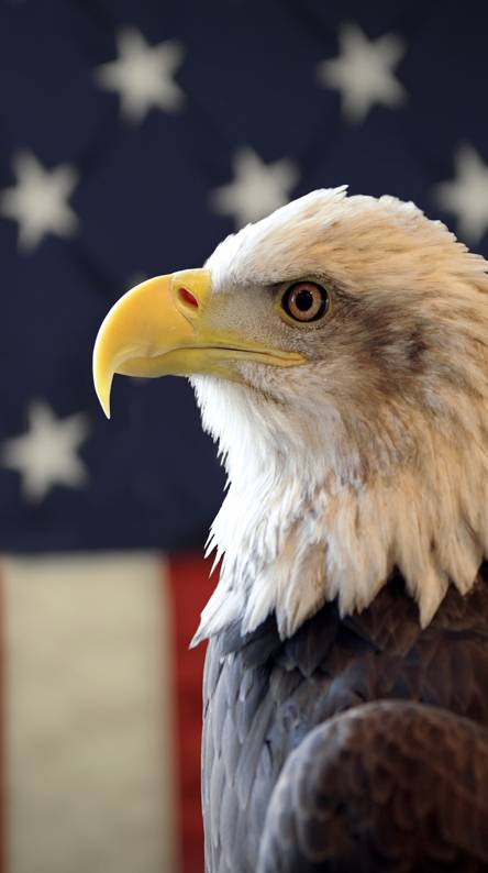 Usa Eagle Wallpapers