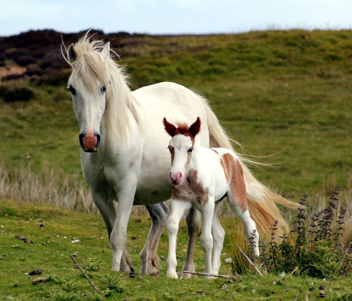 Horse In Field Hd
