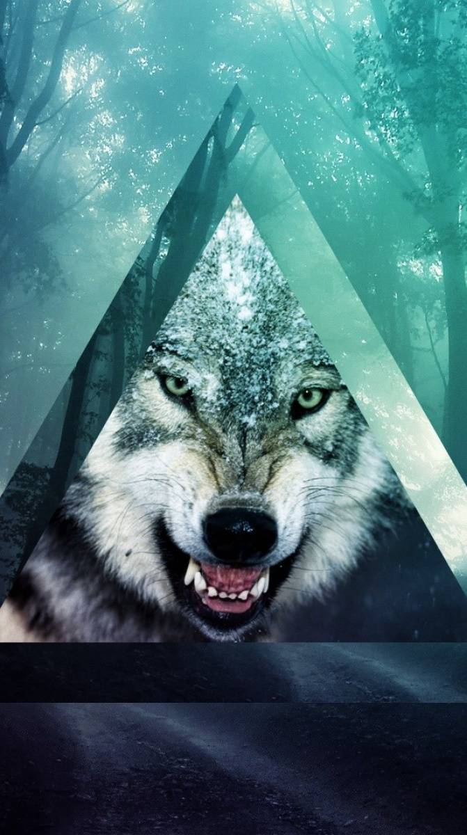 Hipster wolf