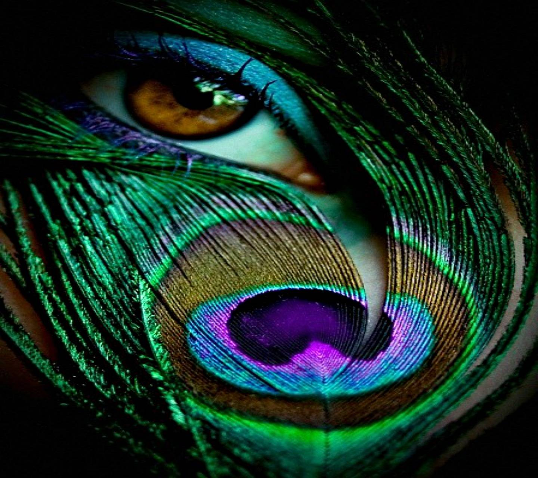 Peacock Eye Hd