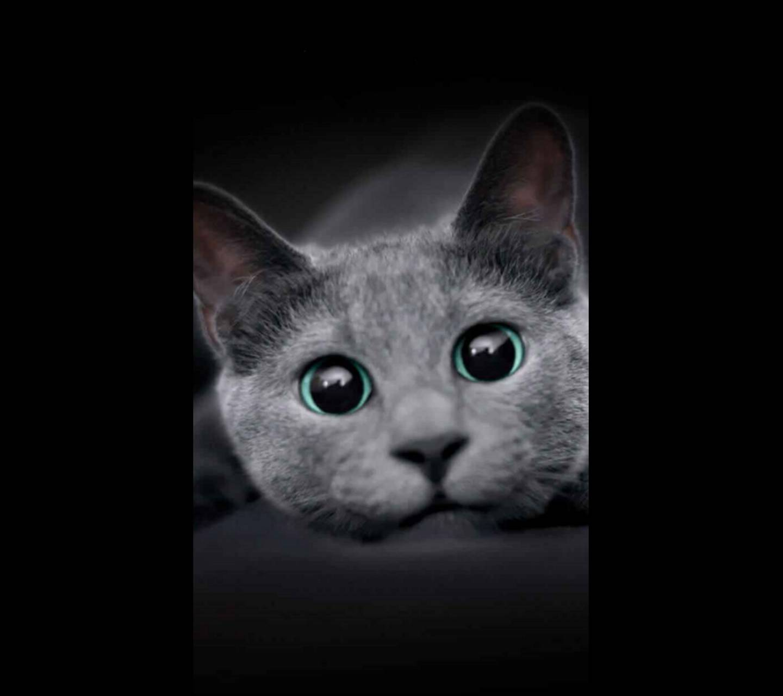 Sheba Kitty