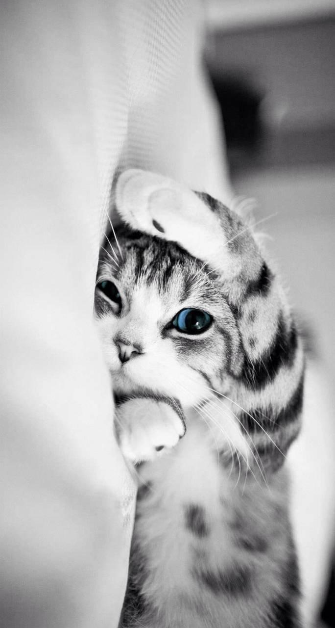 Kucing Comel Wallpaper By Zainulariffin99 Ec Free On Zedge