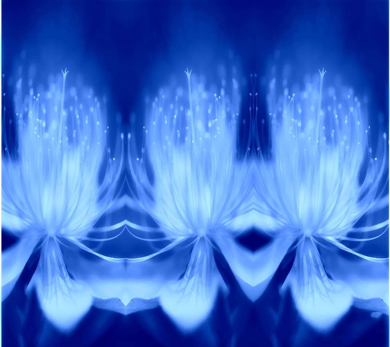 Blue  Floral Flowe