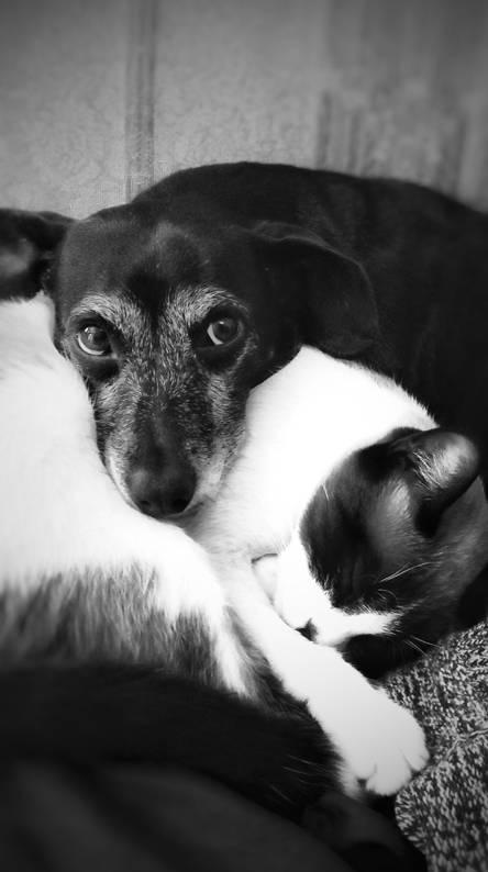 Hugs Dog cat