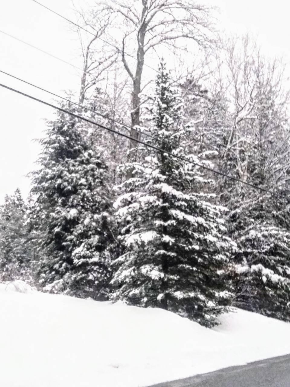 Vermonts xmas Tree