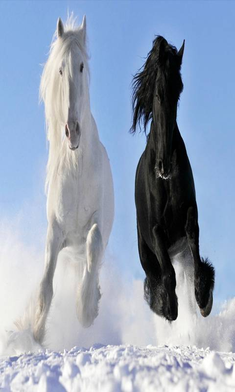 White Black Horse Wallpaper By Julianna 50 Free On