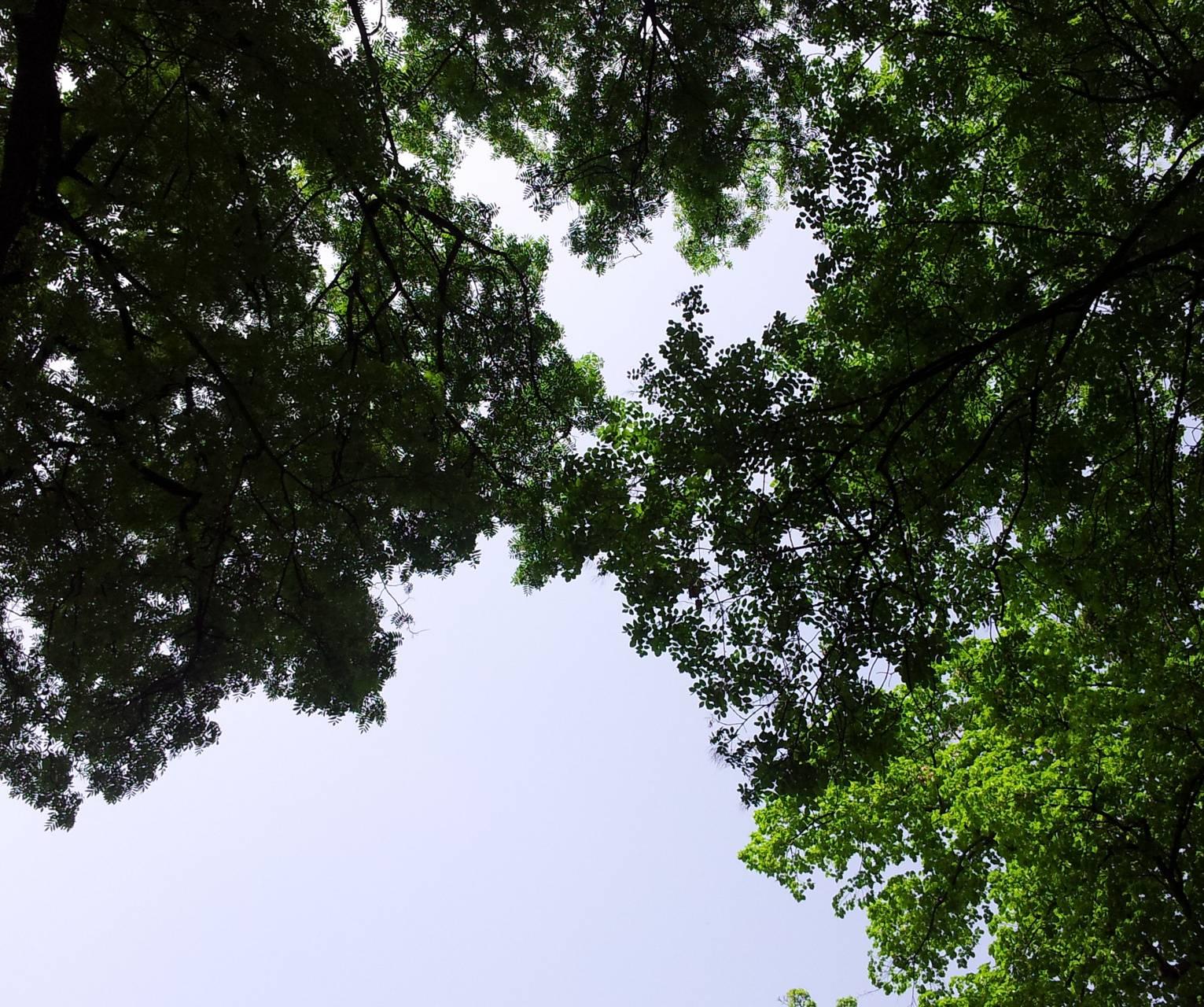 Novi Sad Tree