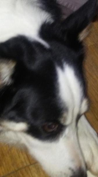Cute Dog2