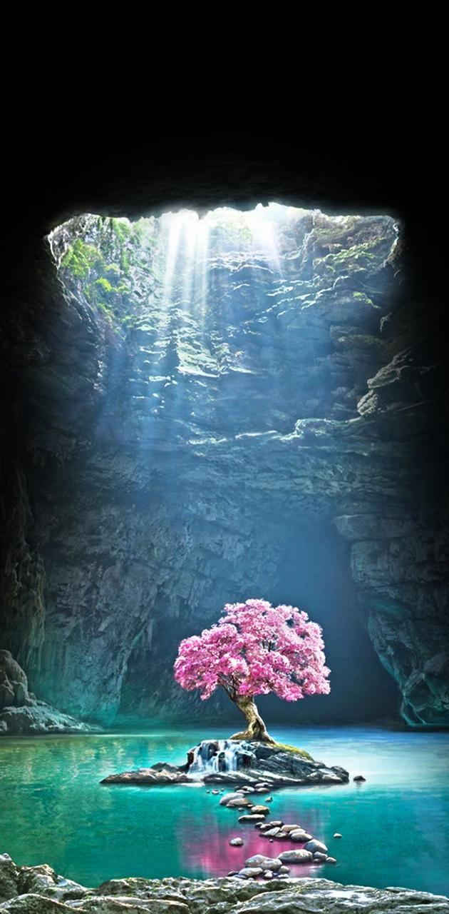 Cave sakura