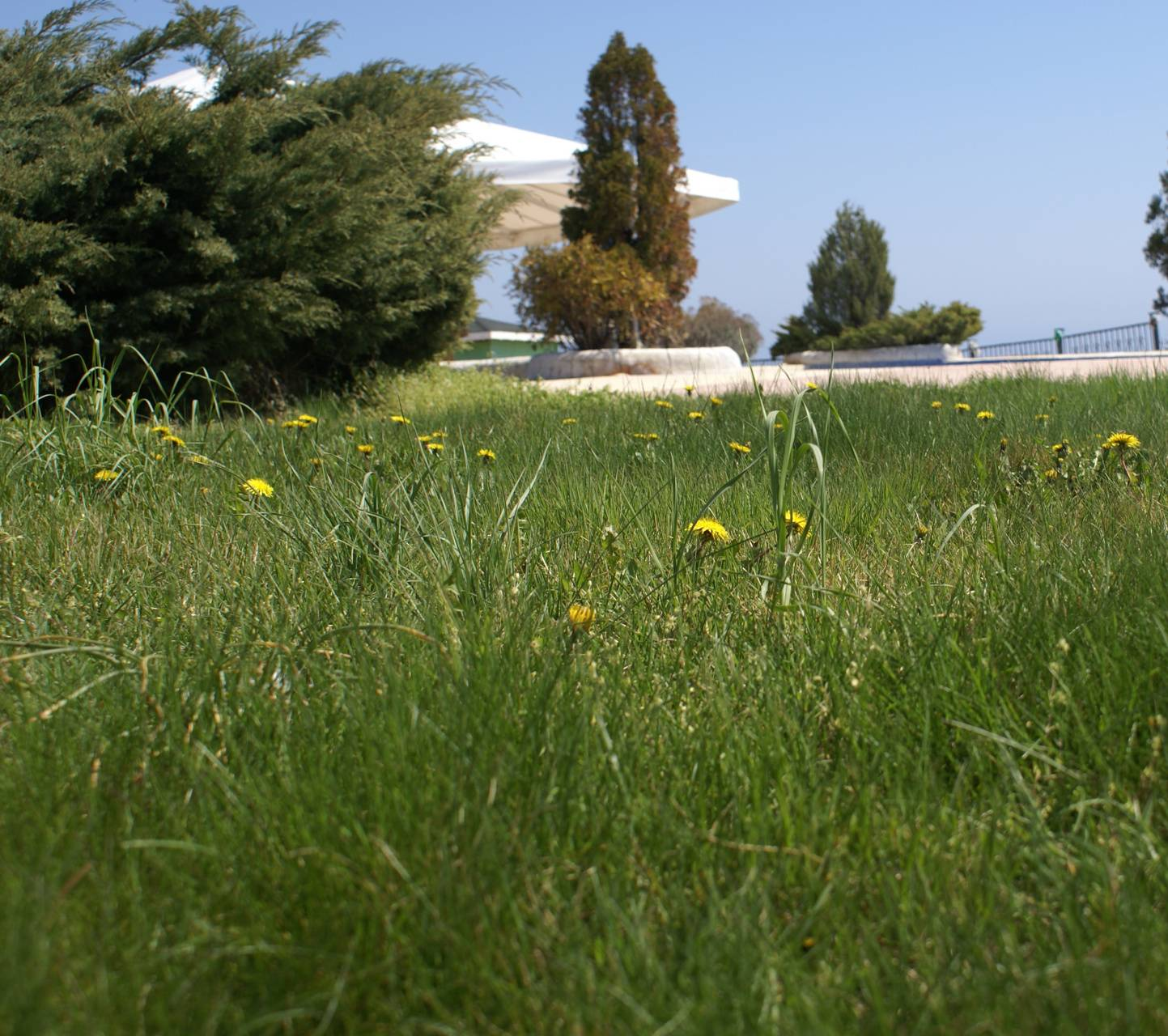 Day vegetation