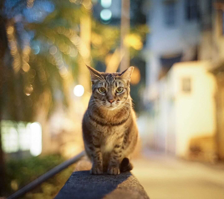 Watch Guard