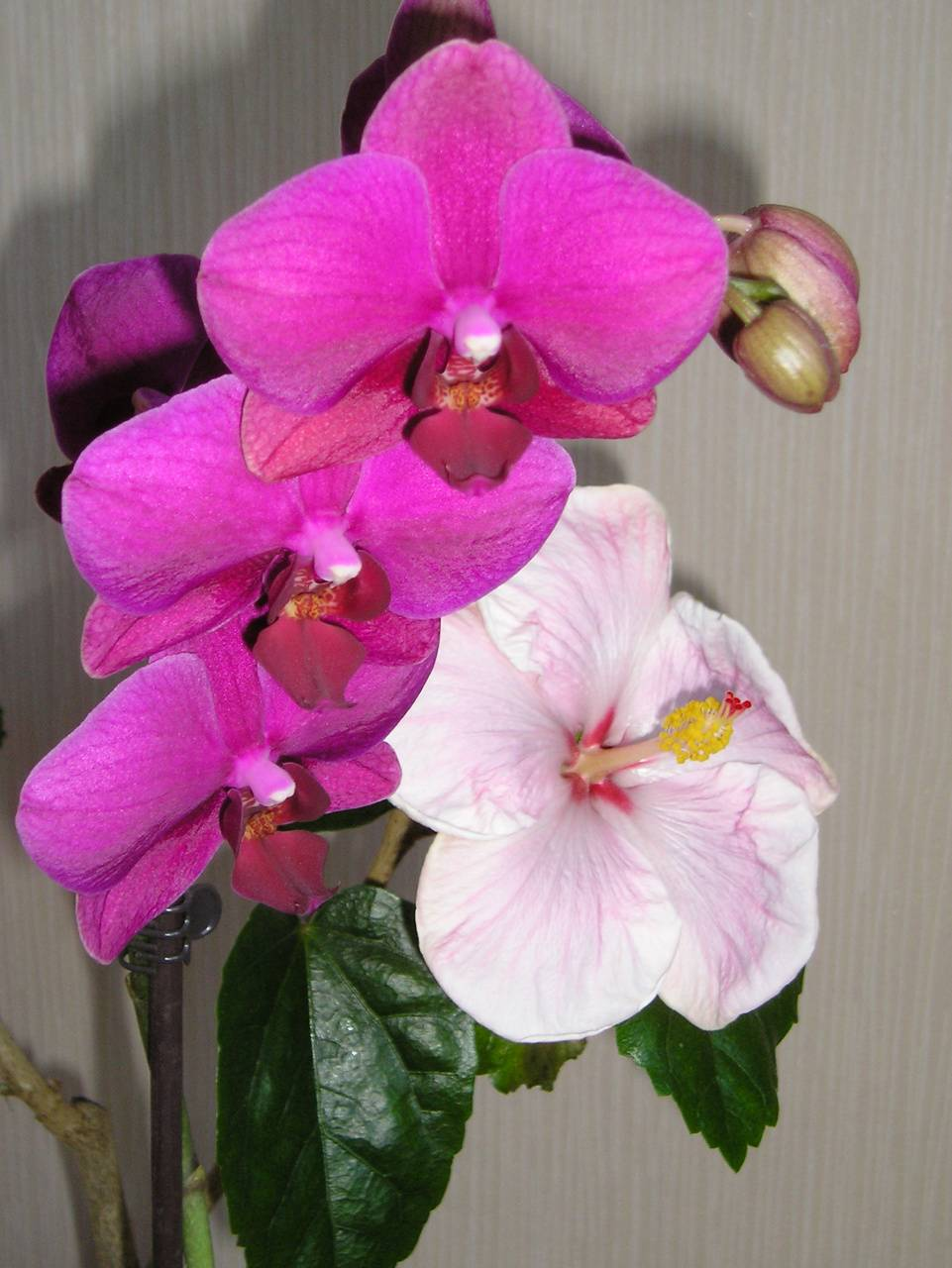 Hibiscus And Orchids