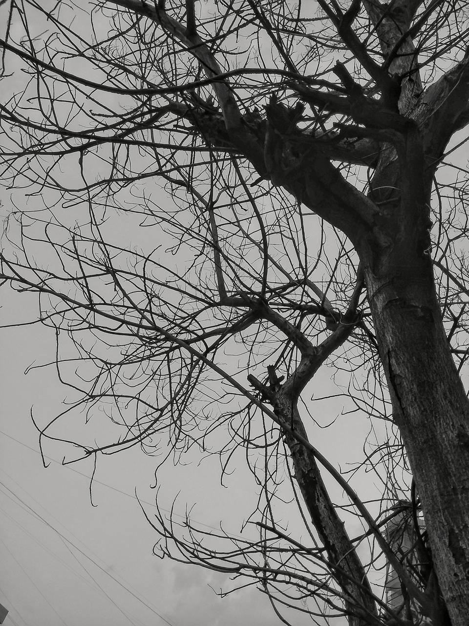 Tree trauma