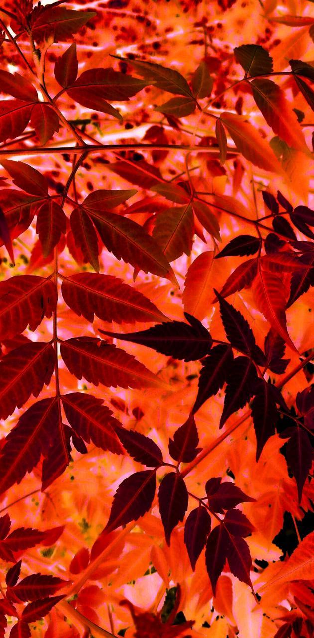 Unique Red leaves
