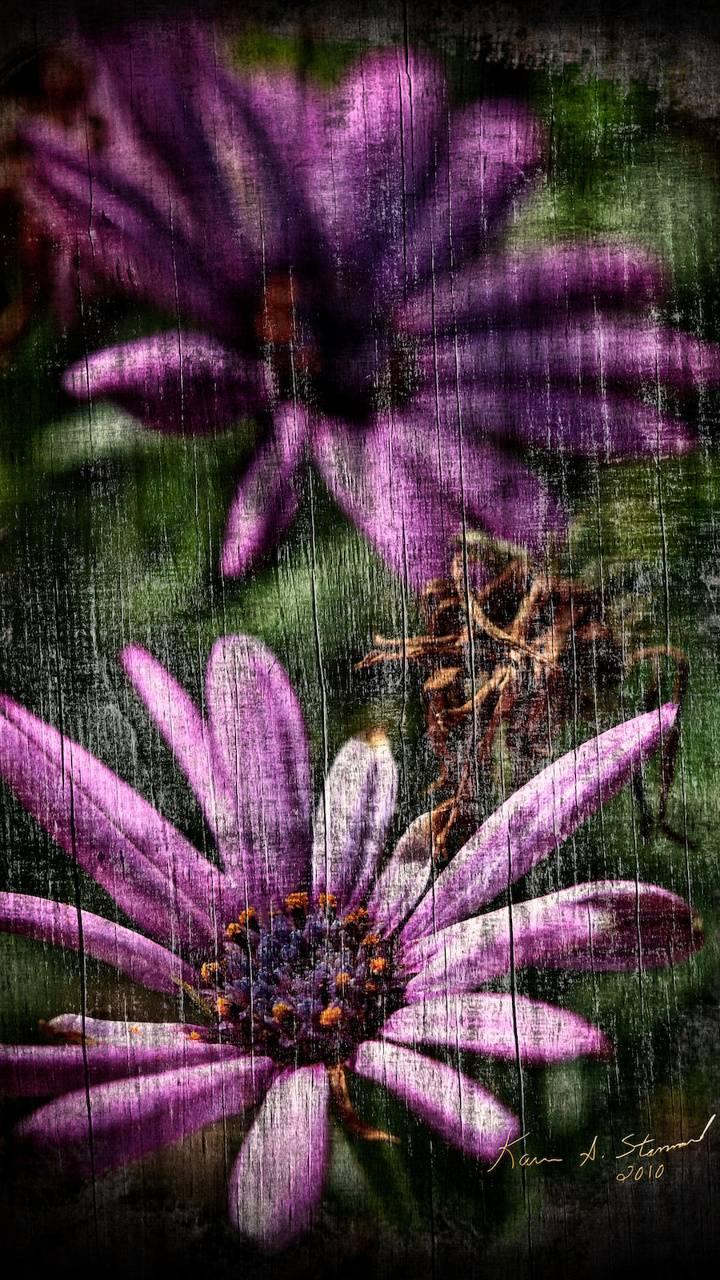 BSI Purple Daisies