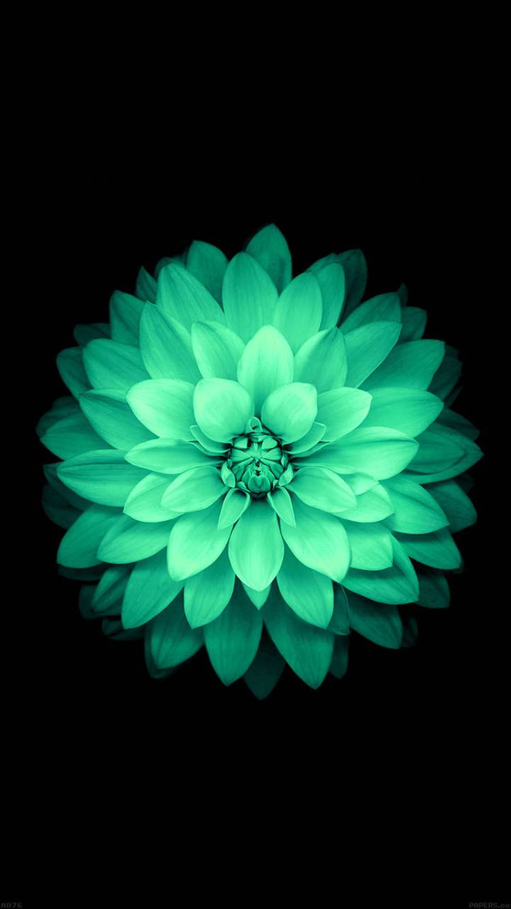 iOS 8 Green Flower
