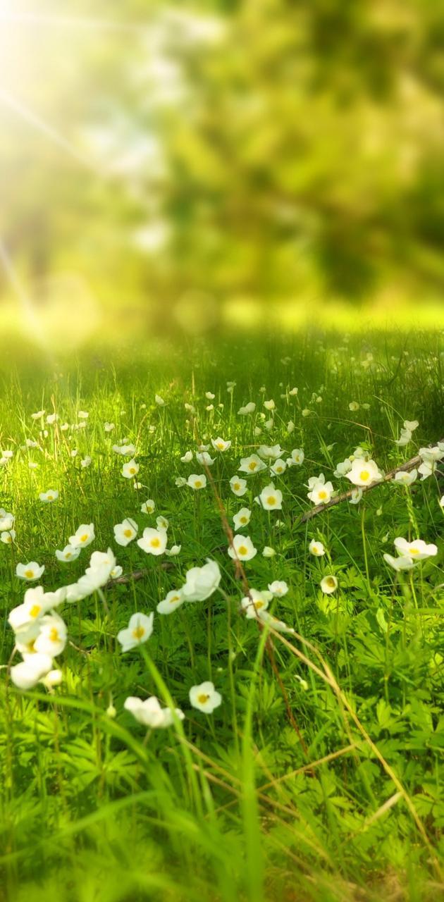 Greenery grassland