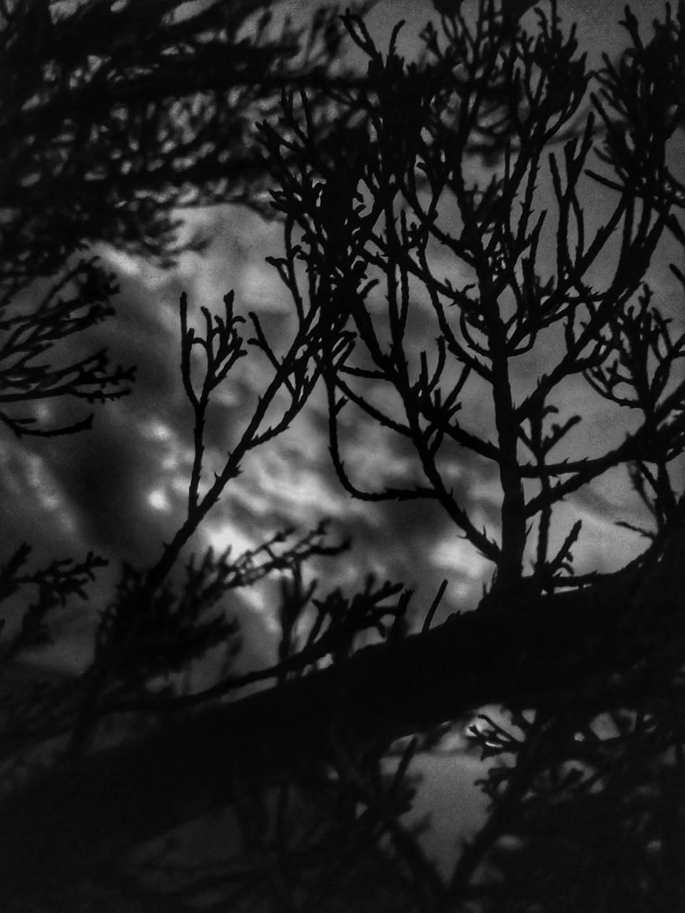 sad tree nature