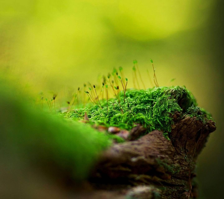 Green Fern Moss