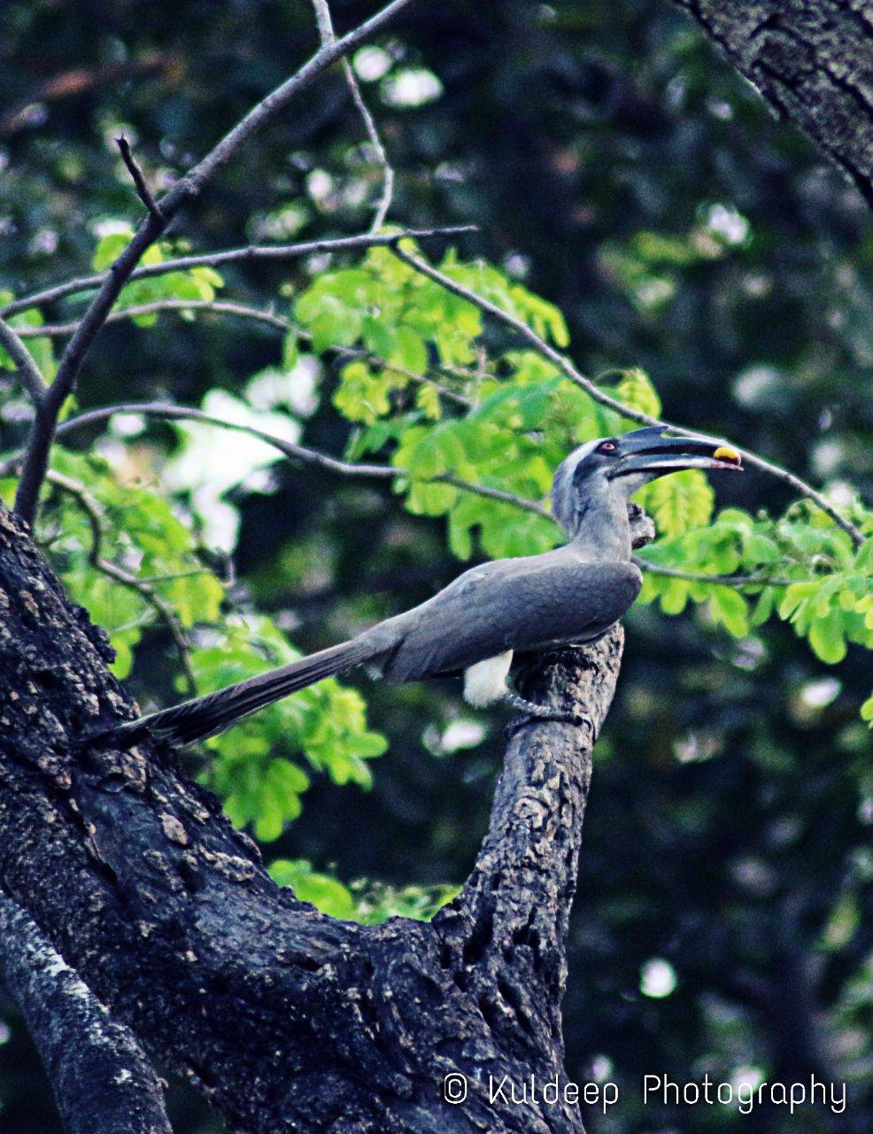 Bird Hornbill Wallpaper By Iking357 8e Free On Zedge