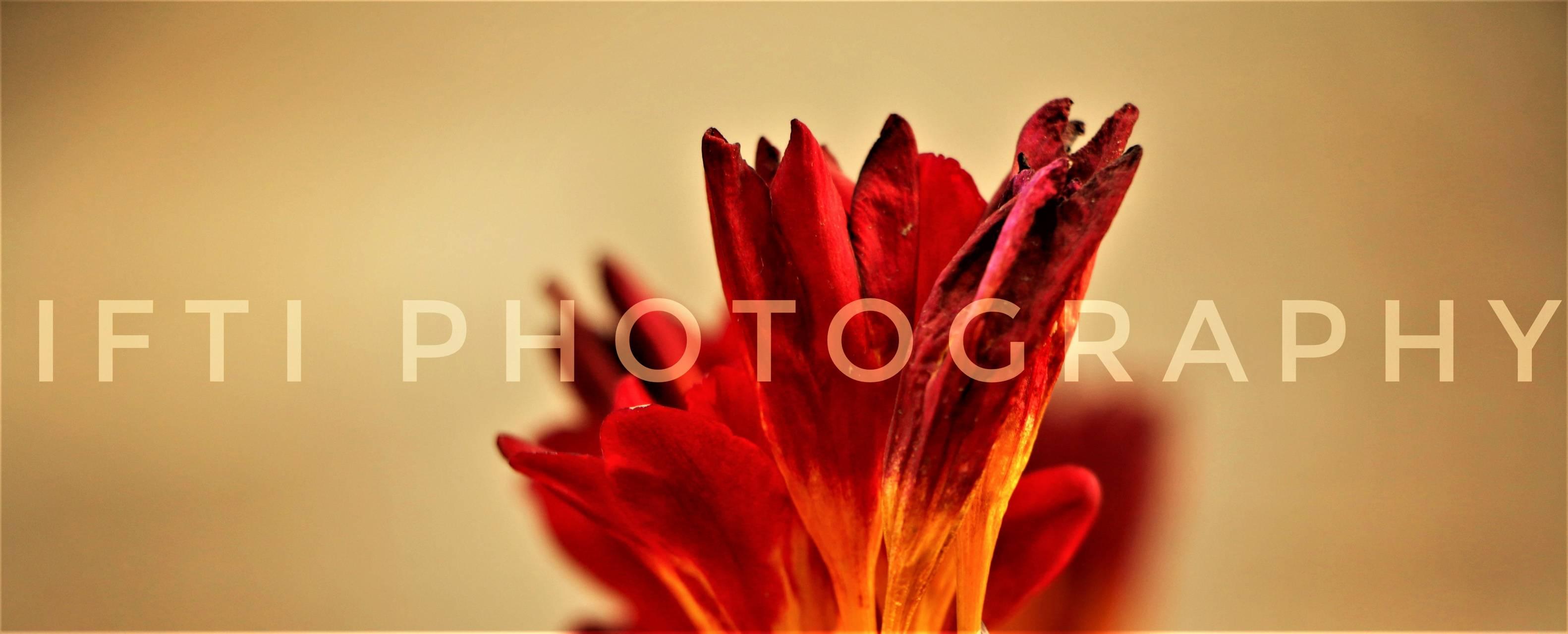 ifti photography