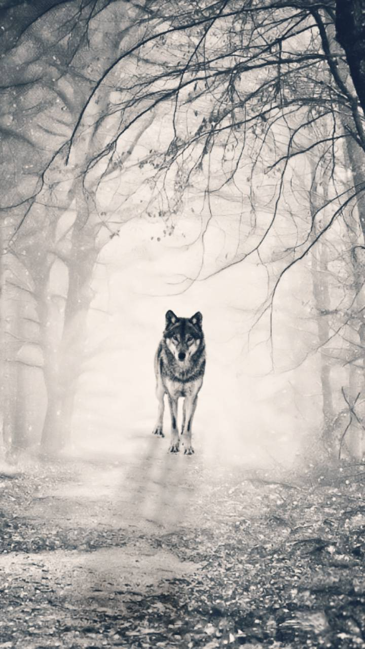 Secluded Wolf