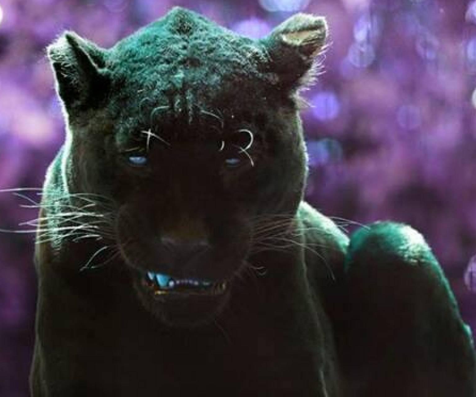 Black Panther sleep