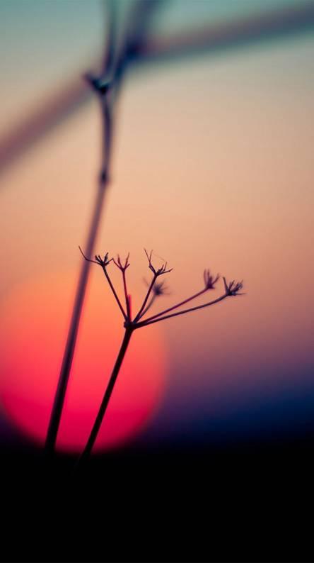 Macro Sunset Flower